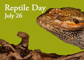Join us to meet reptiles of all kinds