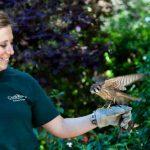 Animal keeper with bird
