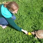 Girl feeding tortoise at CuriOdyssey on grass