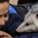 Child smiles at opossum