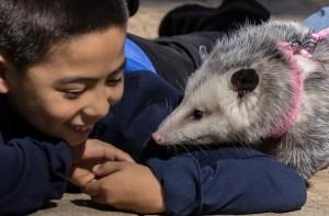 blog-opossum-610x400