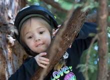 tree-climb-1220x400