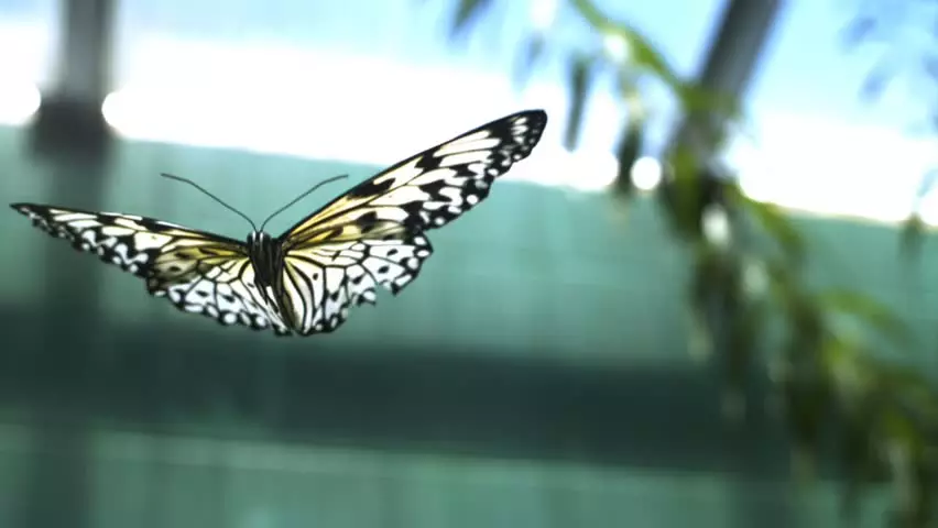A butterfly's wings are an example of mirrored symmetry.