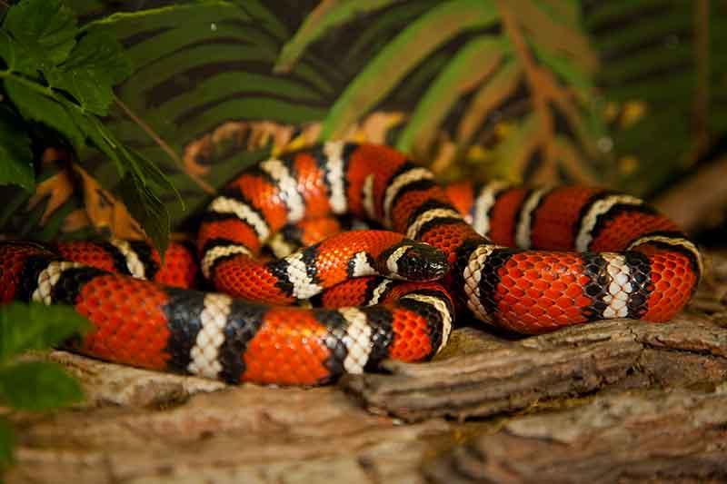 Orange Snake - | Slithering Serpents | Pinterest | Snake, Reptiles ...