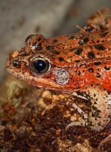 amphibians-thumb