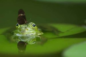 Frog_Butterfly