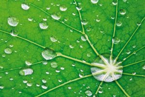 water-on-leaf.jpg__1072x0_q85_upscale
