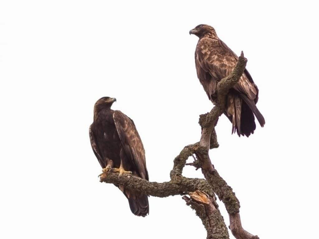 Raptor Power Discover Birds Of Prey Curiodyssey