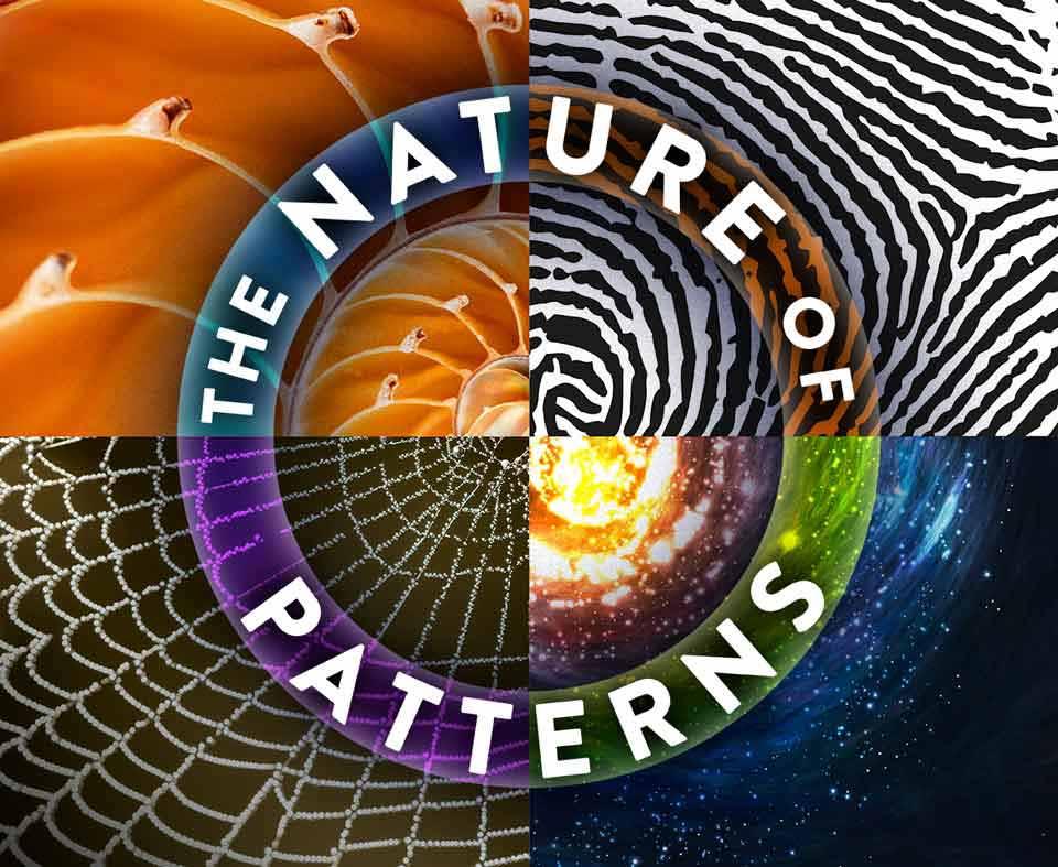 The Nature of Patterns, shell, fingerprint, spider web, stars