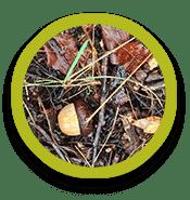 Acorn, twigs, fallen leaves