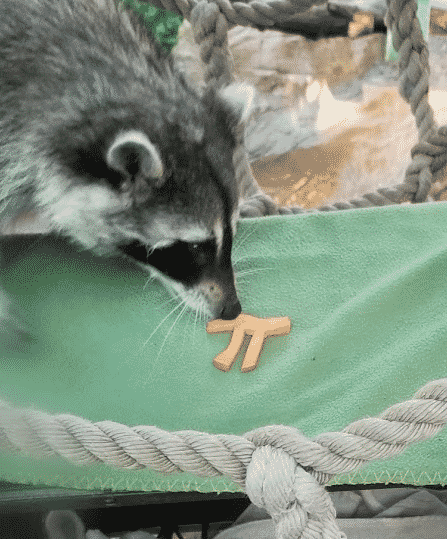Pi for the raccoons