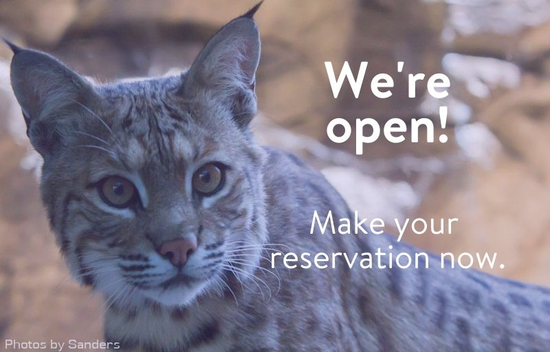 Bobcat - We're Open, Make your reservations now