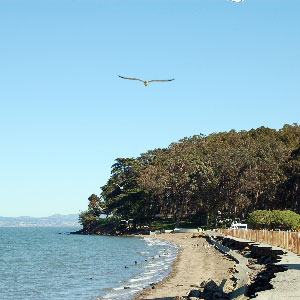 Coyote Pointbeach, bay and trees