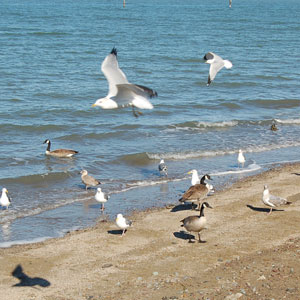 shorebirds at Coyote Point Recreation Area