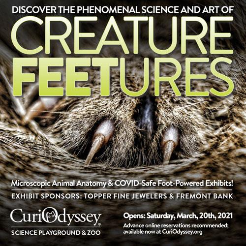 Curio-CreatureFEETure-paw-500X500