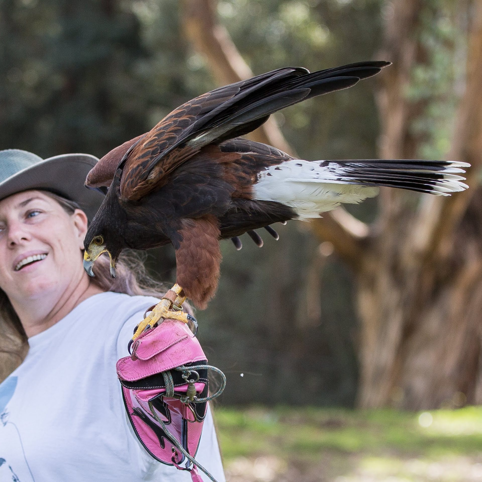 full circle falconry woman