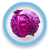 Head of red cabbage