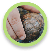 Hand holding a snail shell