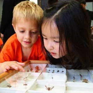 Two children examine glass case of insects